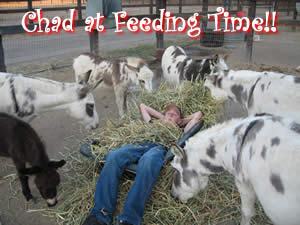 Chad with the miniature donkeys at Feeding Time!!