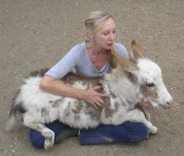 Linda with a miniature donkey baby