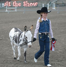 At the Show with Miniature Donkeys