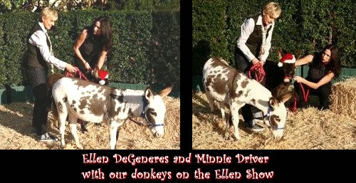 Ellen DeGeneres Show with Miniature Donkeys
