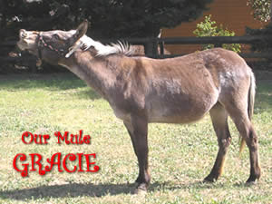 Our Mule, Gracie