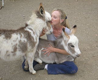 Linda with Miniature Donkey Foals