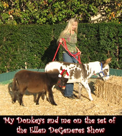 Linda and her miniature donkeys on the set of the Ellen Degeneres Show