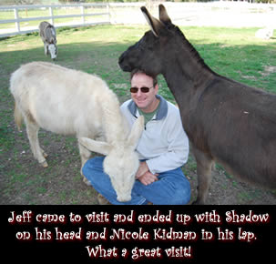 Visitor Jeff with Shadow and Nicole Kidman - Miniature Donkeys